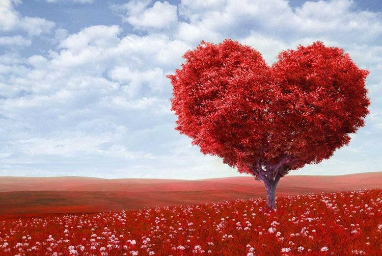 11 – 14 FEBRUARY | Semaine St. Valentin